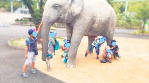 夏の思い出 東山動物園 ほしぞら犬山